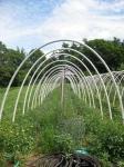 Caterpillar tunnels at Broadfork Farm, NS