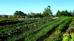 Veggie fields