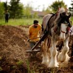 Draft-horse farming at Highland Farms in Newport, NS