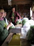Apprentices bagging delicious organic greens at Horse and Garden Organic Farm.