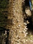 Garlic harvest at Broadfork Farm!
