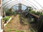 Greenhouse growth at Broadfork Farm
