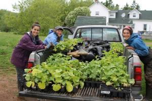 From left, Stephanie Dewar, Verena Varga (Heart Beet Organics), Erin Levine, Apprentice